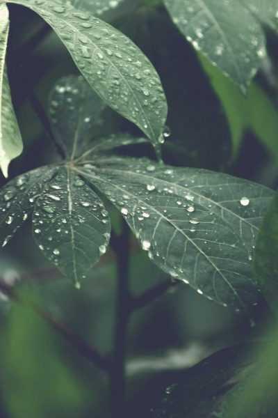 blur-close-up-dew-303024