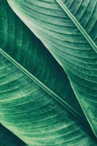 hojas_verdes1